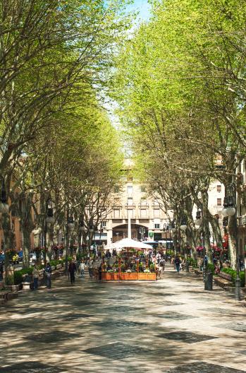 Palma Boulevard