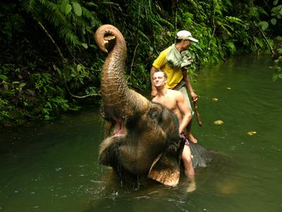 Elefanttrekking
