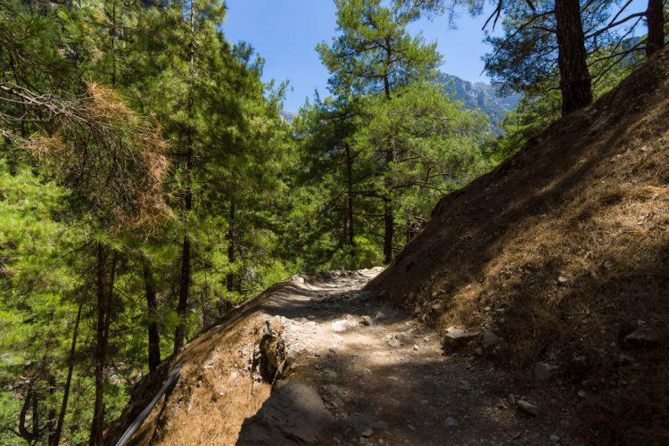 Skov område i Samaria kløften