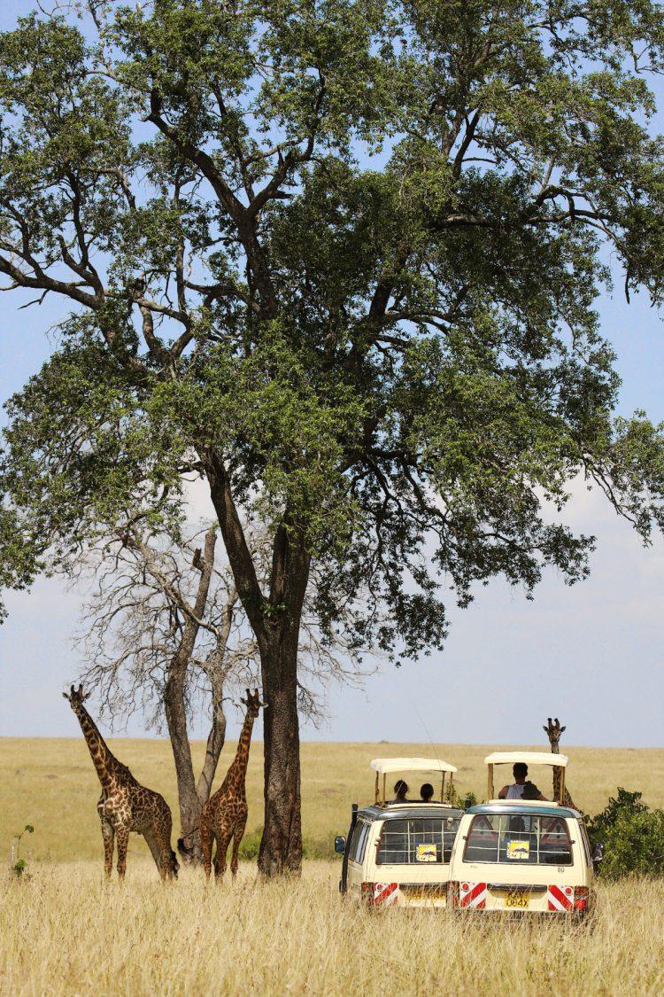 Savannen i Mara - Børn og handicappede på safari