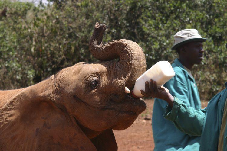 Elefant børnehjem
