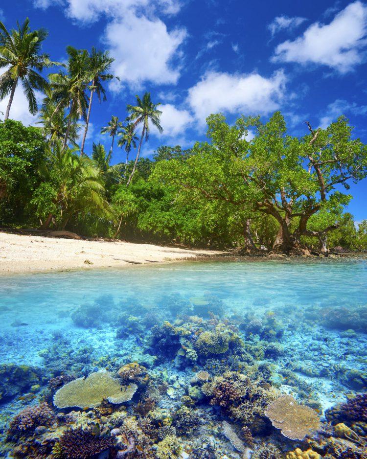 Koral rev på Bali
